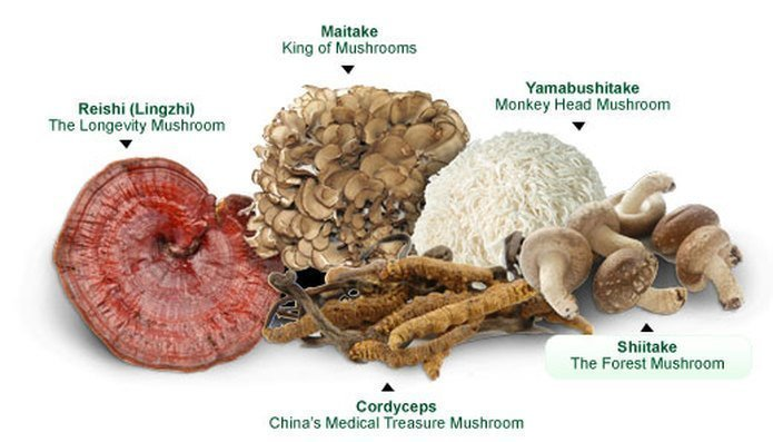 Mushrooms with Useful Food and Drug Properties